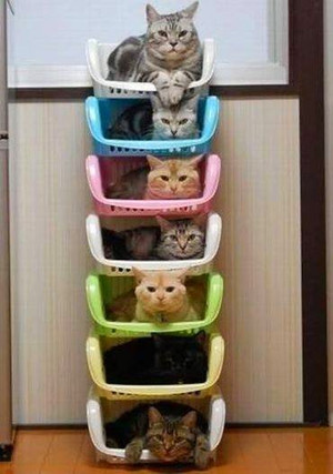 How_to_organize_your_cats_lol_2
