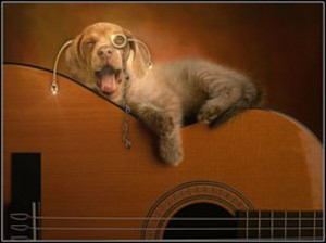 Dog_and_guitar__by_fisher57d7jx61m