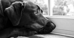 Saddog960x500