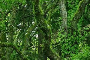 Tree_woods_00011_2