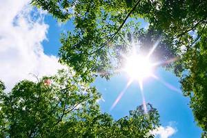 Tree_woods_00023